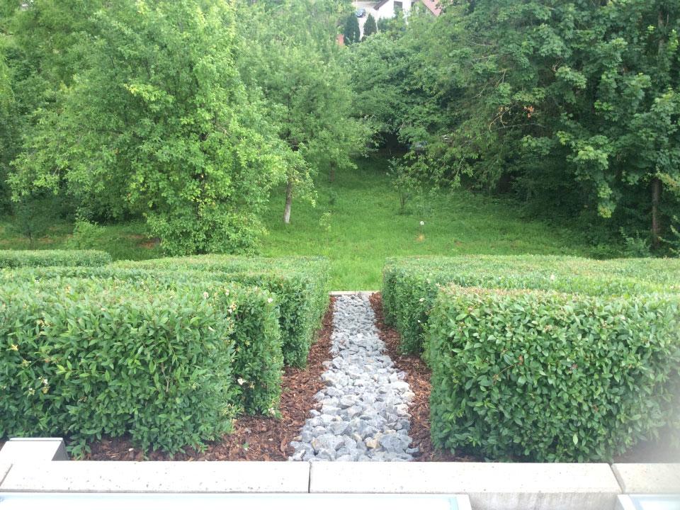 Gehweg angelegt und Hecken geschnitten in Heilbronn - Gartenparadies E. + L. Schmalz GbR