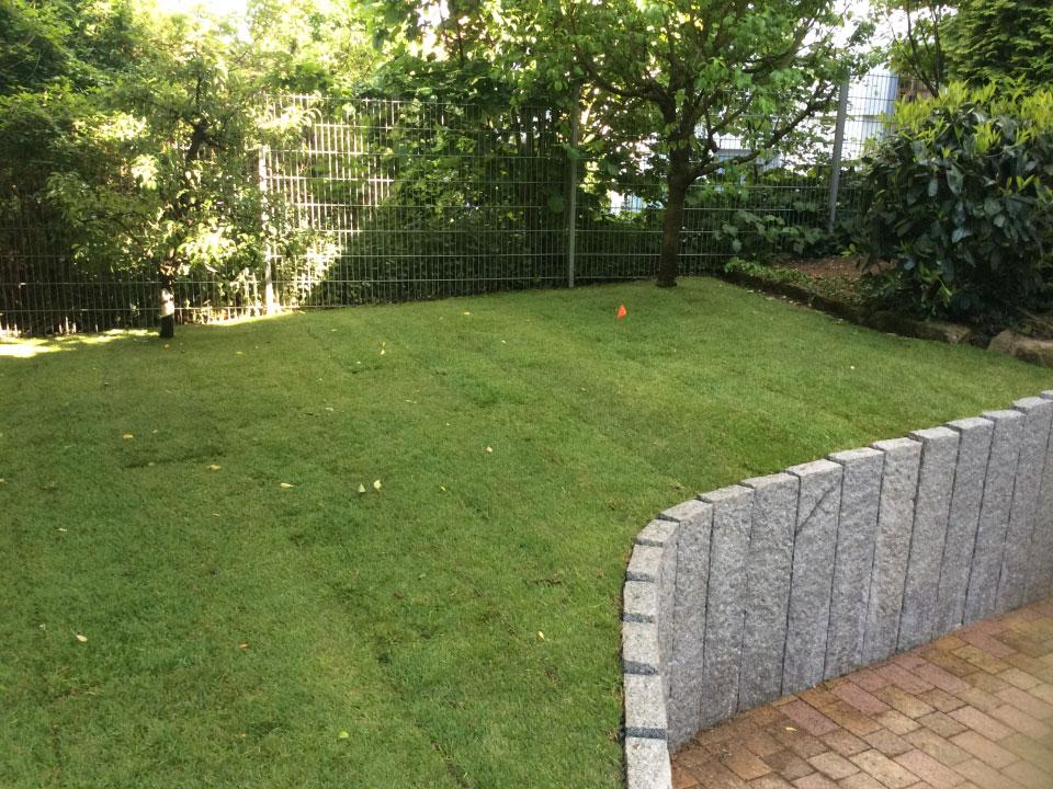 Garten, Rollrasen angelegt in Bad Wimpfen - Gartenparadies E. + L. Schmalz GbR